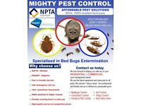 Pest Elimination & Control BedBugs Cockroaches Mice Flea Ants Flies Wasps Pigeon South West London