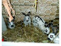 Bubbly rabbits