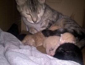 3 Kittens For Sale - NOT READY TO LEAVE FOR 7 WEEKS.