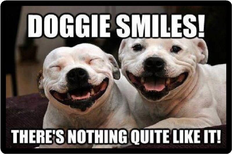 Funny Dog Humor Pitbull Doggie Smiles Refrigerator Magnet