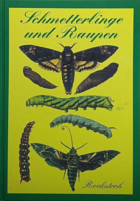 Schmetterlinge und Raupen von Rockstroh, Heinrich