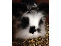 Rabbit needed