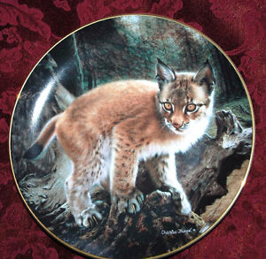 Baby Wild CAT Exploring World Hamilton Collector PLATE P39