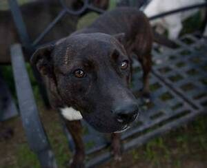 ABANDONED DOG NEEDS A LOVING HOME Drummoyne Canada Bay Area Preview