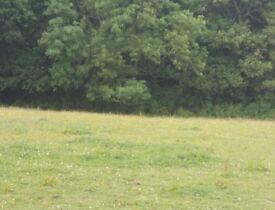 Grass livery £80 pcm/£120 assisted lots grass verwood 60m x20m school VERWOOD