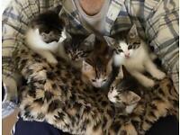 5 fluffy kittens