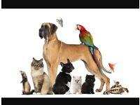 Experienced dog walker/sitter in the Hanham/kingswood area