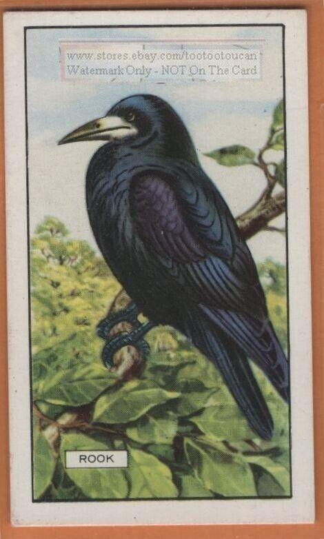 Rook Crow Bird 1930s Ad Trade Card