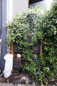 FREE Garden Wall for vegetables   herbs Abbotsford Yarra Area Preview
