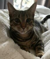 MISSING CAT - Glen Morris