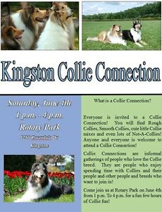 Kingston Collie Connection