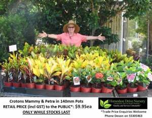 Looking for CHEAP plants - CHECK THESE OUT - All under $10 HS095 Tallai Gold Coast City Preview