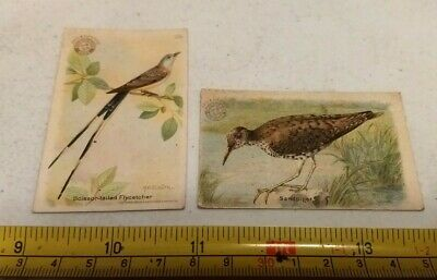 Vtg Useful Birds of America Arm and Hammer Baking Soda Advertising Trade Cards