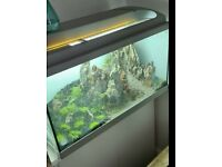 2 foot fish tank with live plants