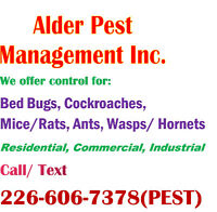 Pest Control Services – Kitcener/Waterloo
