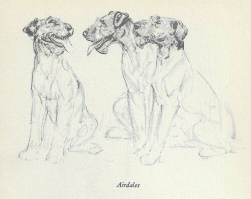 Airedale Terrier - Vintage Dog Print - 1940 Diana Thorne
