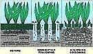 Lawn Coring, Dethatching, Fertilising, Rejuvenation-Green Keeper