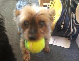 EDIT: now FOUND Ruby the Terrier - much loved in the area