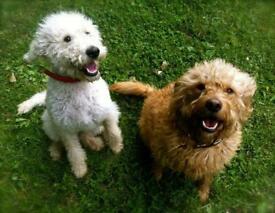 Dog day care and dog walking in Chiswick, Ealing, Kew, Mortlake, Sheen, Brentford, Acton, Richmond.