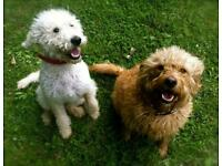 Dog day care and dog walking in Chiswick, Ealing, Kew, Mortlake, Sheen, Brentford, Acton, Richmond.