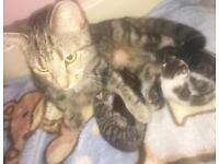 Lovely 4 Newborn kittens