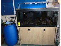 Fluval Roma 240- Complete Marine Fish Set Up