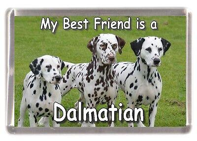 "Dalmatian Dog Fridge Magnet ""My Best Friend is a Dalmatian"" by Starprint"