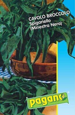 Bustina di Broccolo spigariello (Minestra nera) con circa 750 semi orto verdura