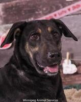 Winnipeg Pound Needs to find homes for dogs....
