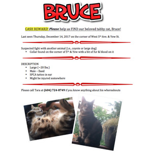 MISSING CAT - $1000.00 CASH REWARD!
