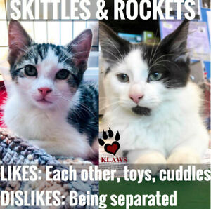 KLAWS's Rockets & Skittles looking for their humans