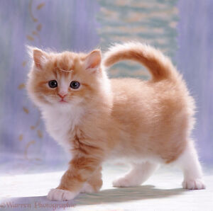 Looking for a little kitten to add to my life!