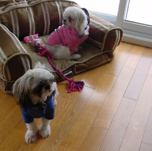 PAMPERED SMALL TO MEDIUM-SMALL HOUSE DOGS OUR SPECIALTY!