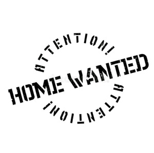 Wanted: Home (house or apartment with lots of lighting)