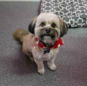SATURDAY PET GROOMING appts available London Ontario image 6