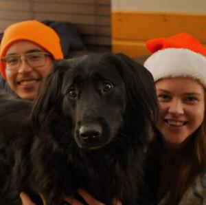 Dog Friendly House/Bungalow Rental for April