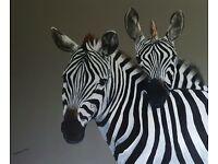 Zebras Large Painting