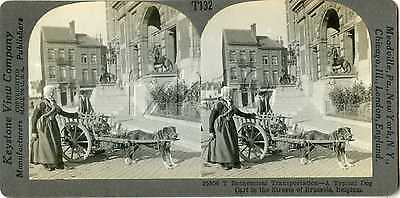 Belgium ~ BRUSSELS ~ Dog Drawn Milk Cart Stereoview 25506 T132 19105 fx