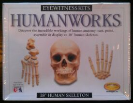 Eyewitness Kits 'Human Works' 18 Inch Human Skeleton (new)