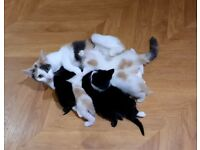 kittens looking for new homes.