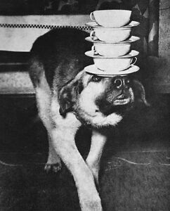 Animal Caretaker/ Dog Walker