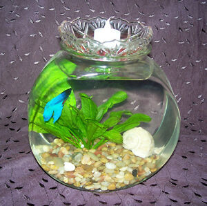 Fish tank new used pet accessories in toronto gta for Fish tank frogs