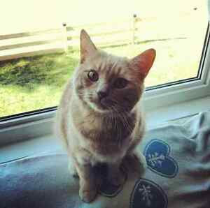 Walter the Cat - Free to a good home