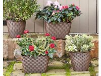 Set of 4 Rattan Planters - FREE DELIVERY