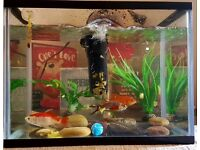 Fish tank with cover, pump, thermometer, stones and artifical plants.
