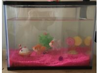 2 goldfish with tank and accessories