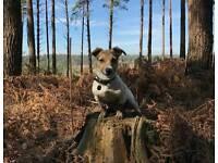 Fully Insured Pet Sitter/Walker & Holiday Boarding