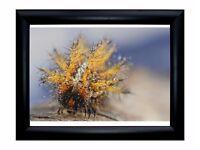 Wonderful Caterpillar framed print 35x29 cm