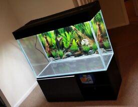Modern Optiwhite Fish Tank / Aquarium FULL SET UP £1 500.00 OVNO