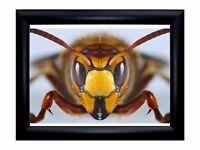 Wonderful Macro framed print 35x29 cm